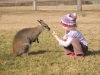 Feeding-a-swamp-wallaby-at-Hunter-Valley-NSW-Australia