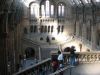 British-Natural-history-museum-London