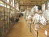 Inside-galerie-de-paléontologie-et-d'anatomie-comparée-Paris