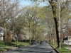 spring-in-new-jersey-local-Montclair-streets