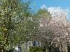 Montclair-garden-pretty-in-spring