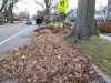 Leaf-litter-from-New-Jersey-trees