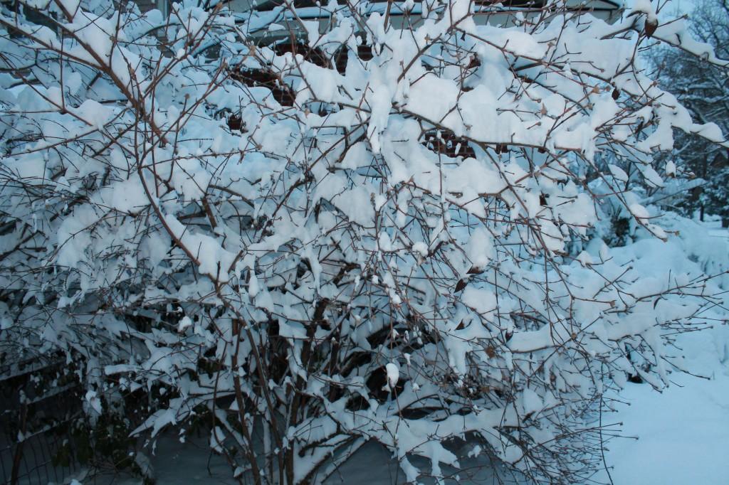 Nemo-snow-storm-makes-dead-winter-foliage-look-good-NJ