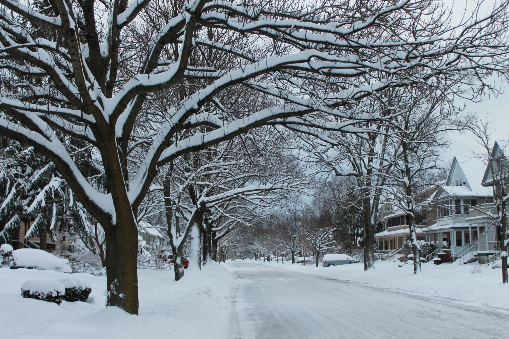 snow-covered-avenue-of-trees-New-Jersey