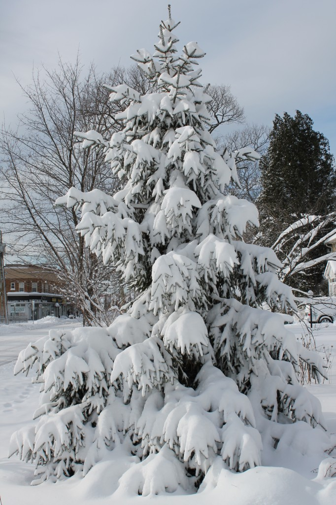 snow-covered-christmas-pine-tree-in-New-Jersey