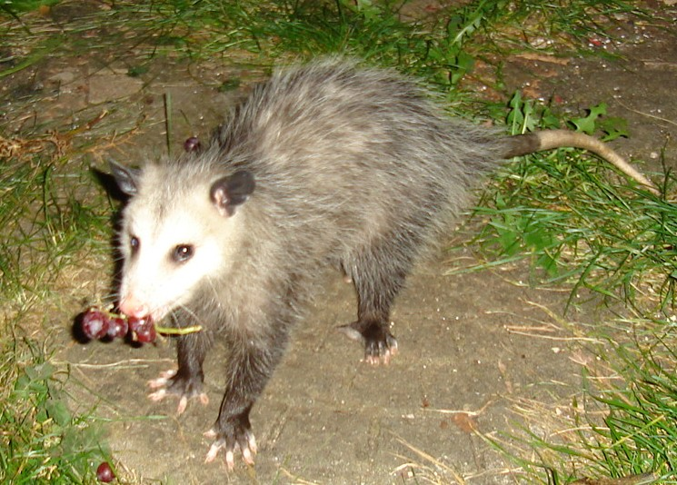 New Jersey Wildlife: Seven furry friends from the backyard