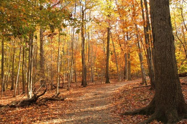 Mills-Reserve-Montclair-NJ