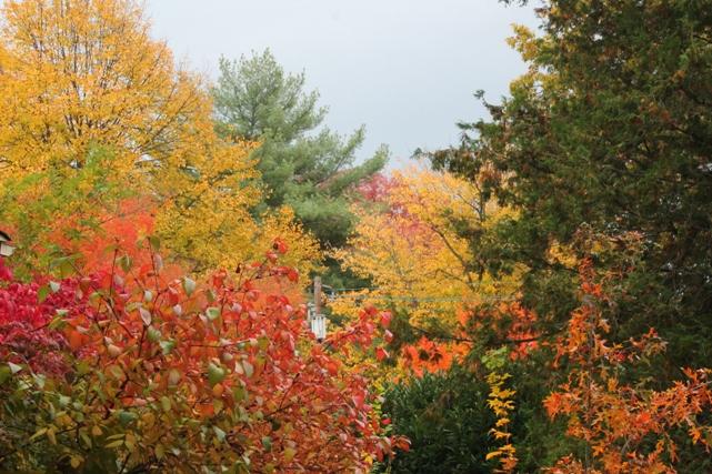 Fall-foliage-trees-montclair-NJ