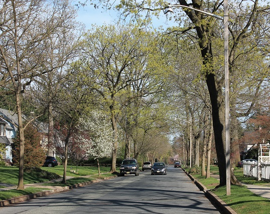 Spring-buds-NJ
