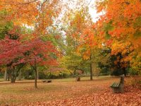 October-fall-foliage-Madison-NJ