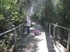 Greater-Blue-Mountains-World-Heritage-Area-rainforest-Jamison valley-NSW-Australia