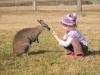 Feeding-a-swamp-wallaby-at-Hunter-Valley-NSW-Australia