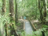 Rainforest-at-Mossman-Gorge-QLD-Australia