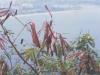 Marmoset-hiding-in-bush-on-Sugarloaf-Mountain-at-Rio