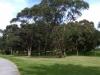 Kamay-Botany-Bay-bushland-near-park-centre