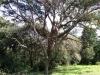 Kamay-Botany-Bay-park-bushland