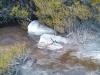 heath-bushland-at-Cape-Solander