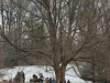 A happy crowd inspecting maple sugar tapping and boiling happening on site at Reeves-Reed Arboretum in Summit NJ