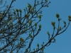 deciduous-trees-sprouting-new-spring-growth
