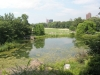 Turtle-Pond-Central Park-New-York