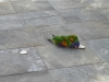 Rainbow-Lorrikeets-in-our-front-yard