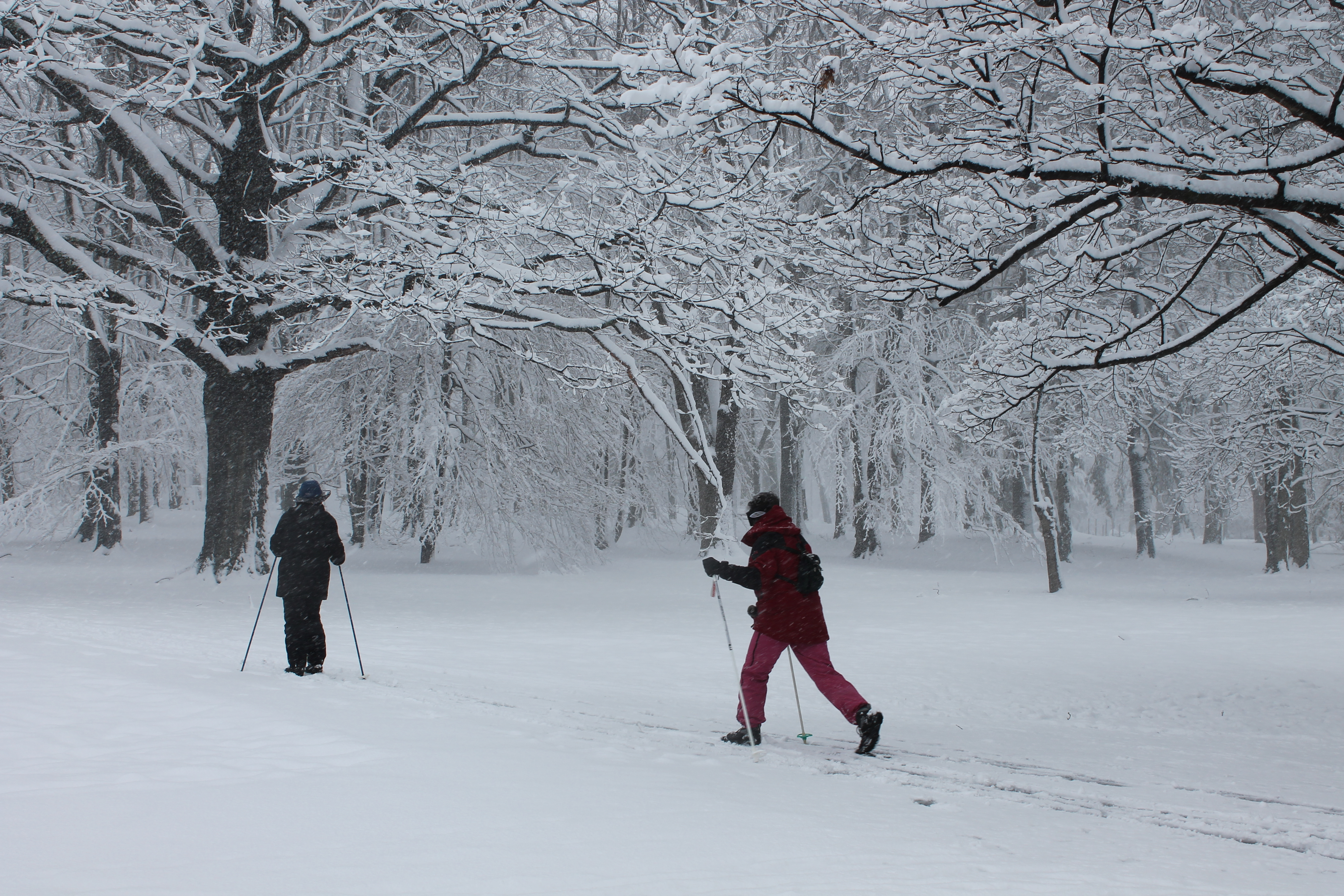 cross-country-skiing-in-our-suburban-park-new-jersey