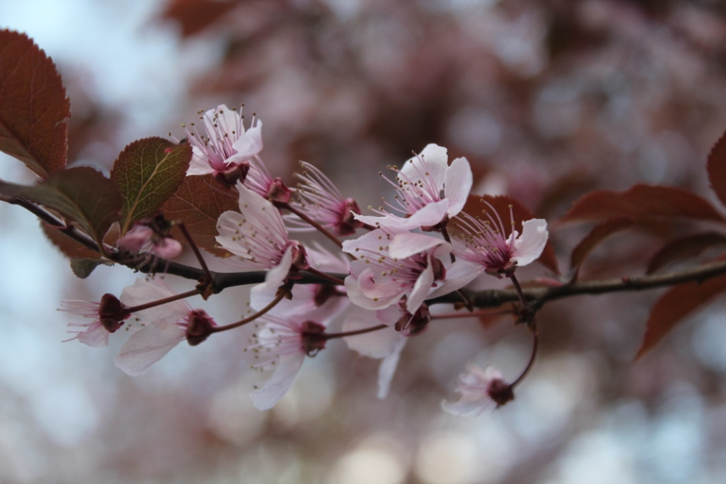 Spring-blooms-New-Jersey