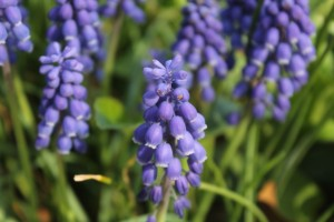 bluebell-new-jersey-spring