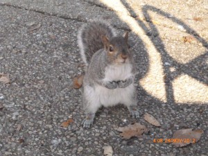 Squirrel_USA