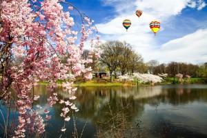 Cherry-Blossom-Festival-Branch-Brook-Park-NJ-April