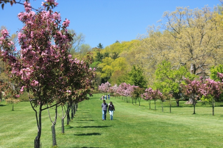 Avenue of Crab apple trees at NJ Botanical gardens