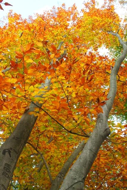 Brookdale-park-late-afternoon-fall-Montclair-NJ
