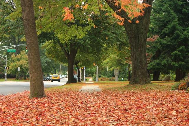 Fall-leaves-dropping-NJ