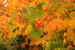 fall-foliage-new-jersey