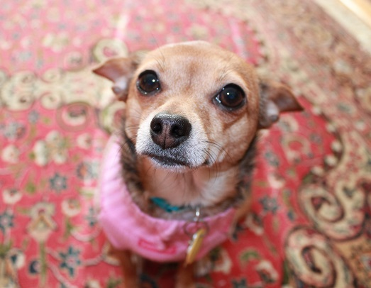 a-rental-lease-agreement-in-NJ-is-harder-to-obtain-with-pets