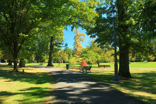 Late-summer-greenery-in-Anderson-Park-NJ