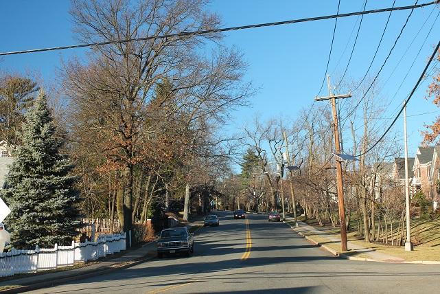 bare-trees-in-december