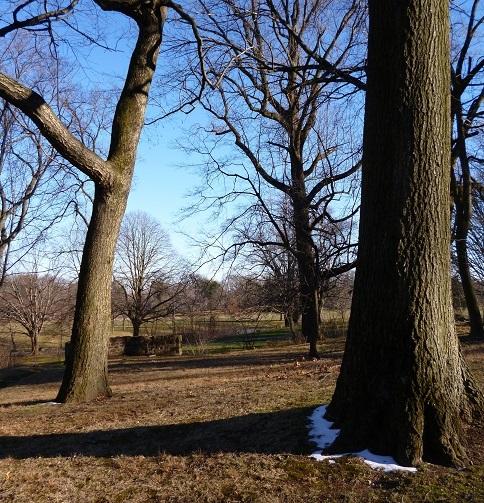 Winter-Brookdale-Park-Montclair-NJ-January