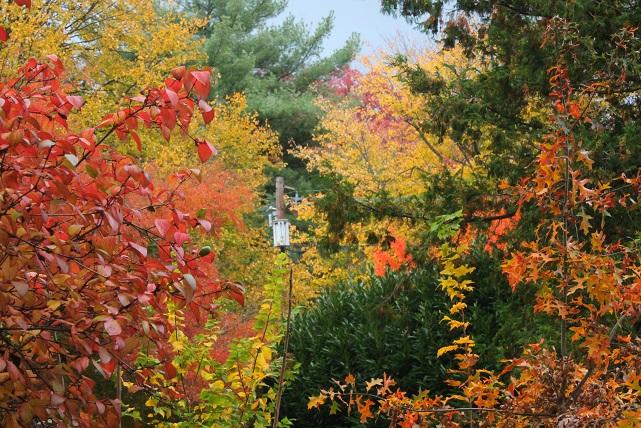 November-garden-foliage-Montclair-NJ