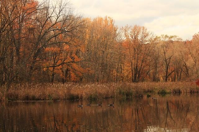 November-fall-pond-scene-Morristown-NJ