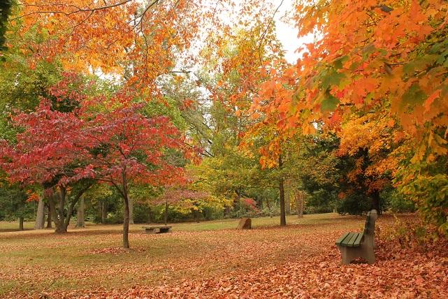 October-fall-foliage-Madison-NJ