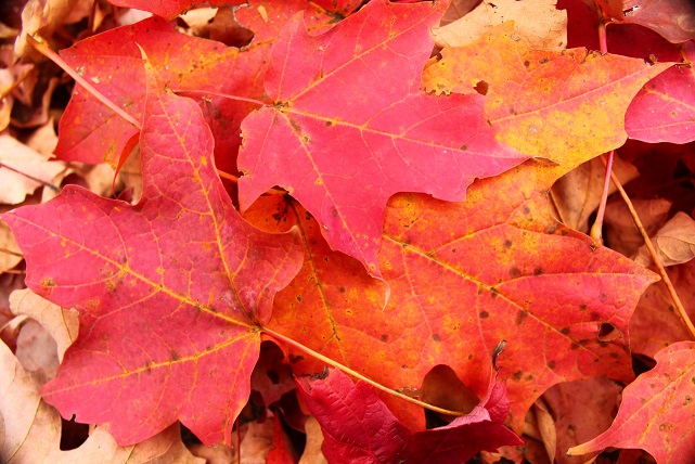 October-fall-foliage-NJ