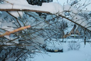 Beautiful-Winter-in-NJ