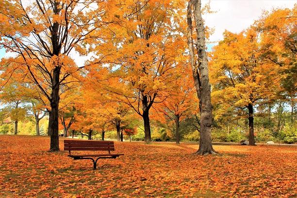 Fall foliage Allendale NJ
