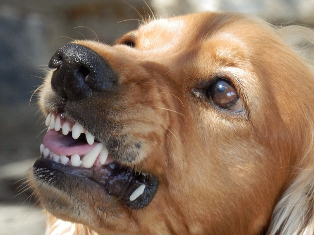 Dog bites are common liability problems